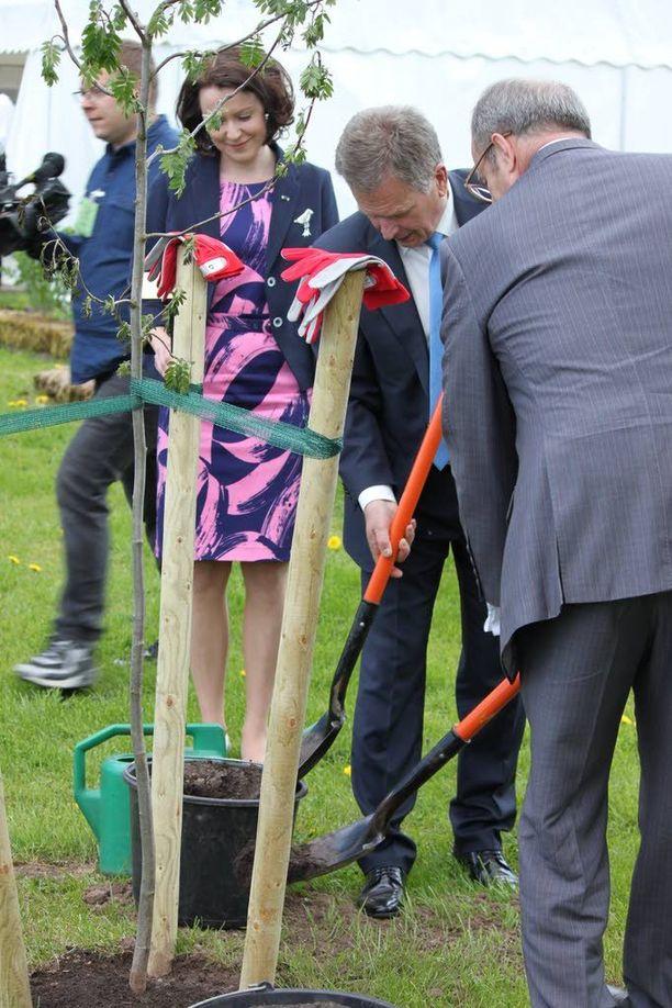 Presidentit Sauli Niinistö ja Toomas Hendrik Ilves lapioivat multaa Niinistön istuttaman pihlajan juurelle Ilveksen kotitilalla.