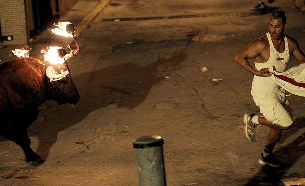 Ihmiset juoksevat karkuun tuleen sytytettyä härkää kaduilla.