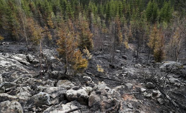 Kangasalan ja Lempäälän maastopalot veivät paljon metsää vuonna 2017.