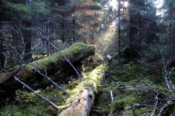 Kintulammin alueelta löytyy monenlaista metsää.