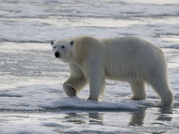 Maailman ilmatieteen järjestön WMO:n tuoreen raportin mukaan ilmastonmuutokset vaikutukset ilmenevät nopeammin kuin aiemmin on uskottu.