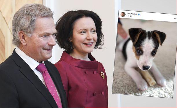 Presidentti Sauli Niinistön ja rouva Jenni Haukion koiranpentu Osku on tenterfieldinterrieri.