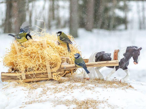 Kirpputorilta hankittua muovihevosta on käytetty useissa lintulaudoissa.