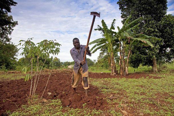 Suurin osa maailman kahvista viljellään kahden hehtaarin kokoisilla pienviljelmillä. Kuvassa ugandalaisen kahvinviljelijän pelto.