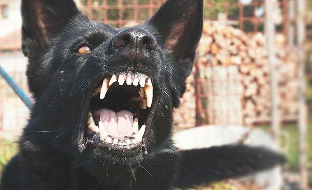Vesikauhu leviää useimmiten ihmiseen sairastuneen eläimen pureman kautta. Yleisiä levittäjiä ovat koirat ja lepakot. Tauti on ihmiselle oireiden puhjettua liki sataprosenttisen tappava.