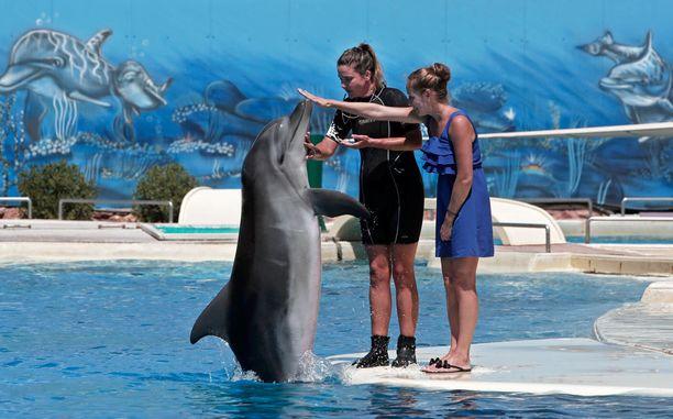Attican eläinpuiston väitetään käyttävän delfiinejä vain viihdyttämiseen.