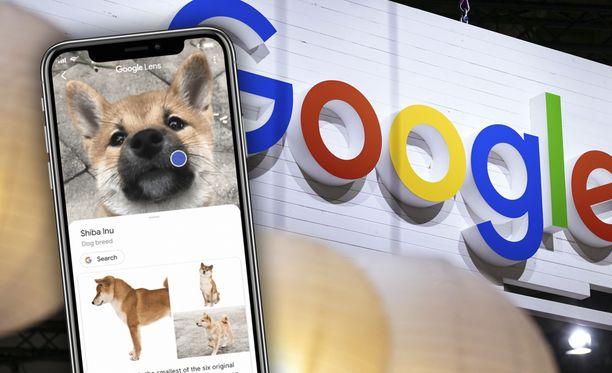 Google Lens kertoo esimerkiksi koiran rodun.