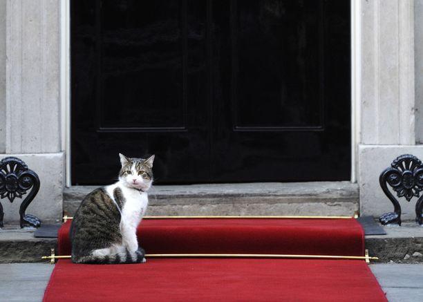 Larry on ollut Downing Streetin virallinen hiirenpyydystäjä jo vuosia. Vuonna 2012 kissa varasti punaisen maton.