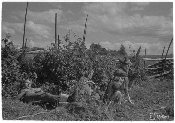 Luutnantti Pentti Luotolan oma sotakoira Sota-Siro vartioi valppaana, kun partio lepäsi. Kuvauspaikka on Alalampi 16.7.1944.