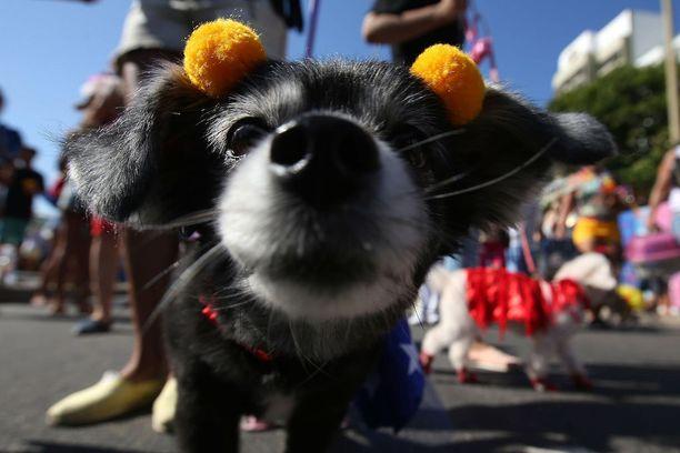 Juhlinta alkoi jo viime viikolla, kun Copacabanan rannalla vietettiin eläinten karnevaaleja.