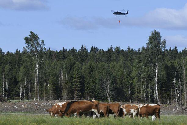 Ruotsissa raivoavat valtavat metsäpalot, joita kuvaillaan nykyhistorian rajuimmiksi.