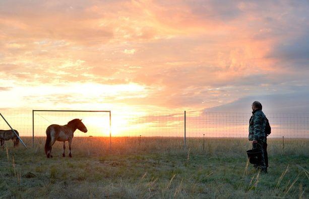 Suuri osa Przewalski-hevosista elää nykyisin vankeudessa, mutta Orenburgissa yritetään saada ne takaisin luontoon.