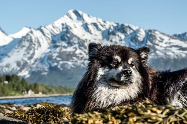 Äijä-koira on melkoinen eränkävijä.
