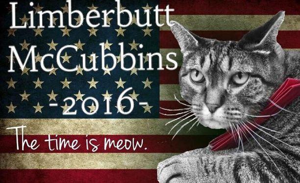 Äänestäisitkö kissaa, jos muut ehdokkaat eivät miellytä?