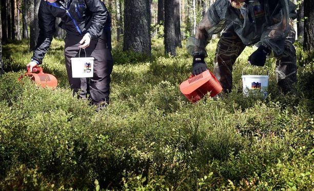 Marjastaja voi törmätä metsässä myös harvinaisempiin löydöksiin. Kuvituskuva.