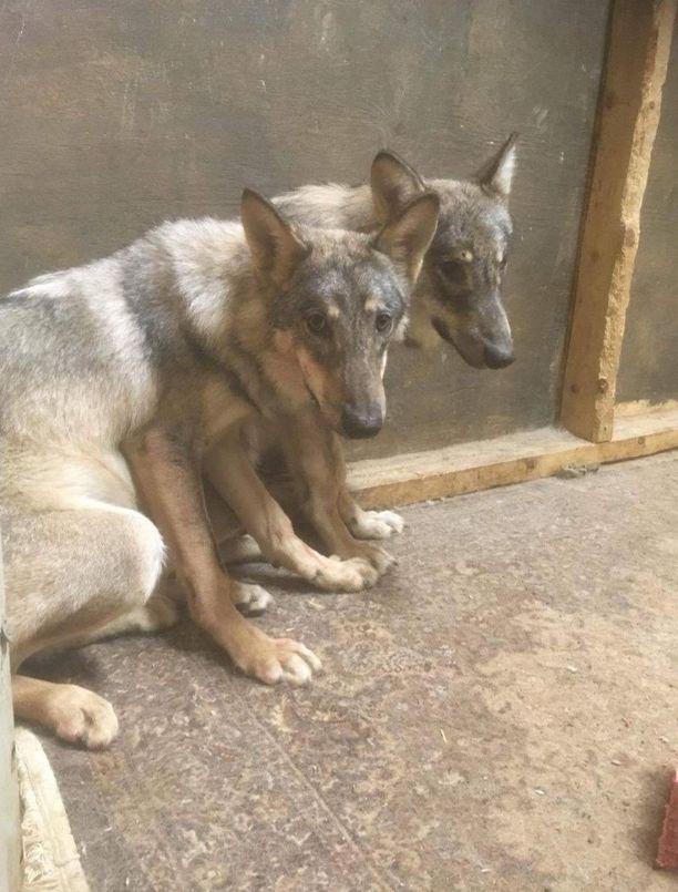 Poliisi epäilee tekijöitä muun muassa törkeästä eläinsuojelurikoksesta.