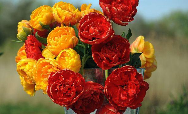 Kukat ilahduttavat aina.