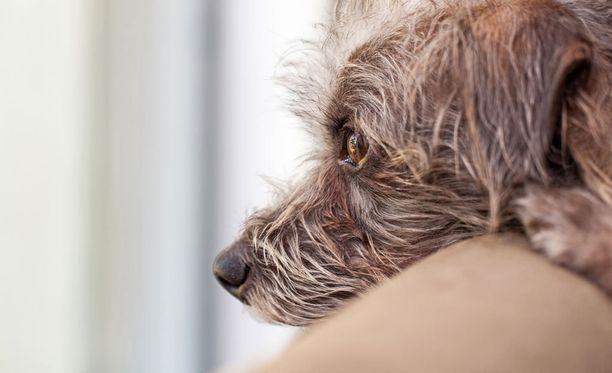 Oikeuden tuomiosta ei selvinnyt, mikä oli koiran kohtalo. Kuvan koira ei liity tapaukseen.
