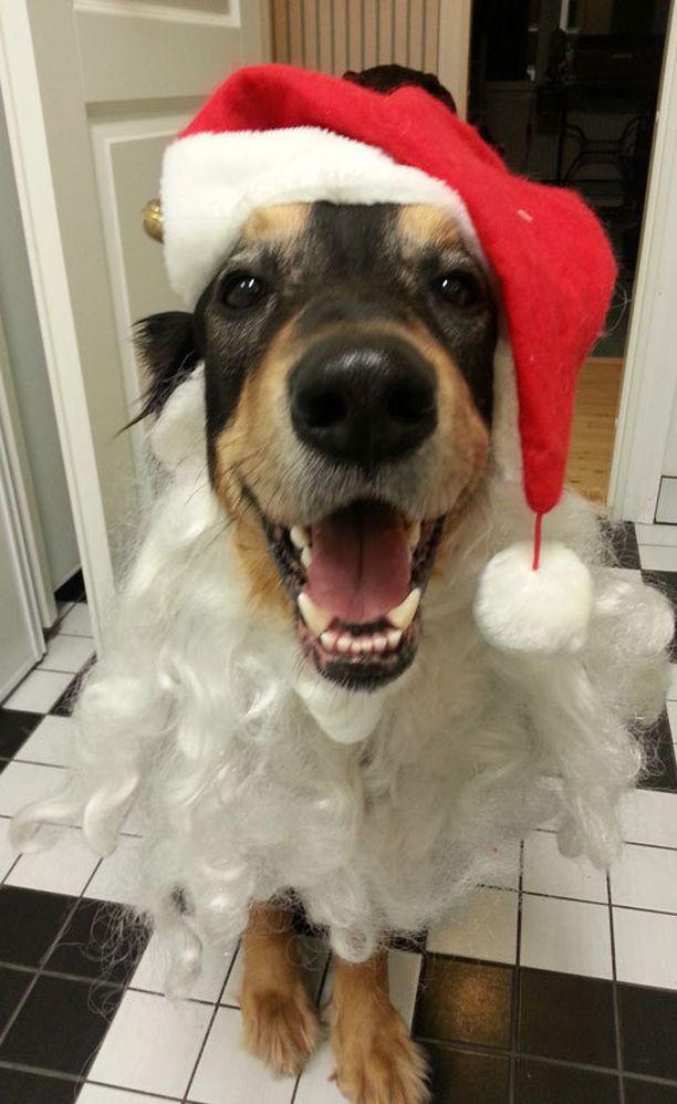 Luukku 24: Viimeisestä luukusta kurkistaa pukin virkaa viime jouluna toimittanut ihana Kaapo.
