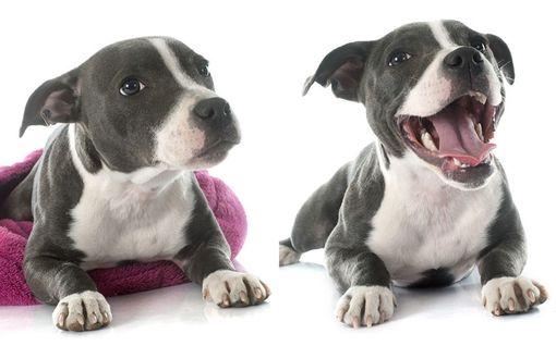 Tiedätkö, milloin koira pelkää? Moni tulkitsee merkit väärin