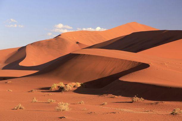 Namibin aavikon punaisia hiekkadyynejä.