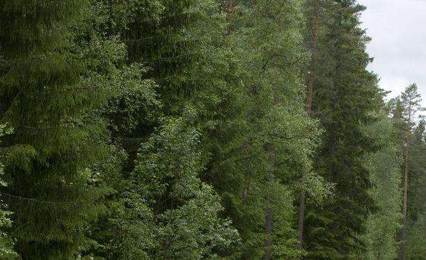 Ruumis löytyi metsästä. Kuvituskuva.