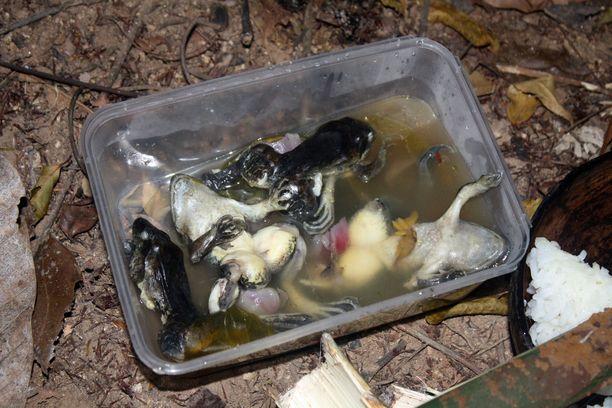 Vaikka selviytymisruoka oli enimmäkseen hyvää ja maittavaa, suolistetut ja keitetyt sammakot vaativat makunsa vuoksi paljon chiliä.