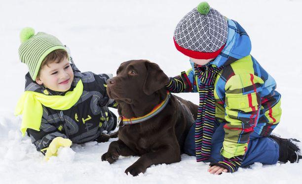 Koiran vastuulliseen hoitamiseen kuuluu sen ulosteiden kerääminen.