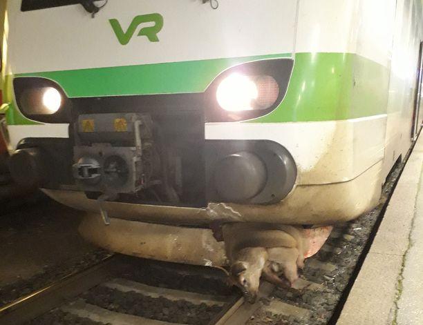 Peura kulki junan mukana noin 30 kilometrin matkan-