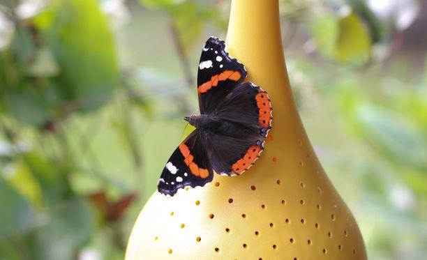 Perhoset ruokailevat baarissa, jonka menoa voi seurata puutarhassa.