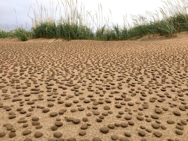 Kahden euron kolikon kokoisia hiekkakakkuja oli noin viiden metrin levyisellä alueella.