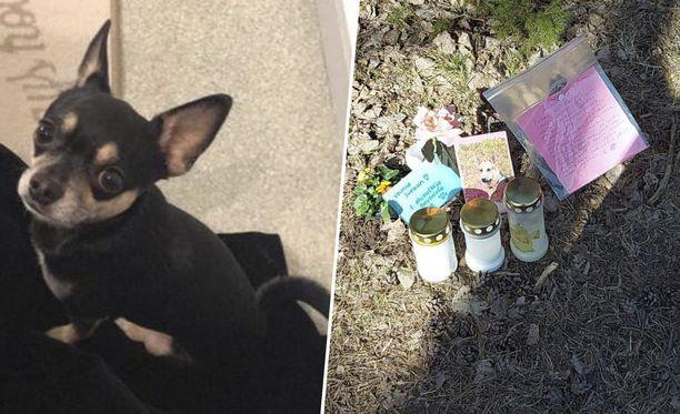 Olli-koiran kuolinpaikalle jätettiin kynttilöitä Helsingissä.