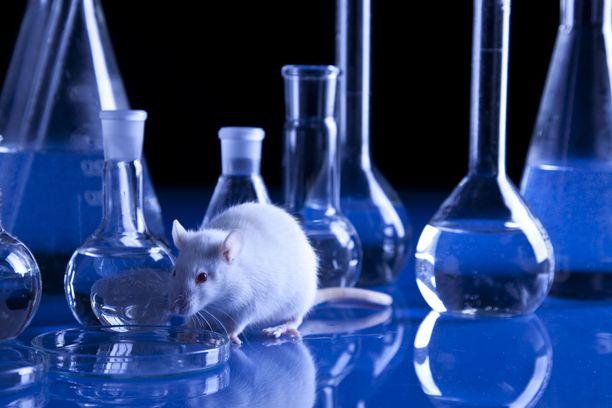 Kosmetiikan eläinkokeet on EU-maissa kielletty jo viisi vuotta sitten. Seuraavaksi EU haluaa kiellosta maailmanlaajuisen. Kuvituskuva.