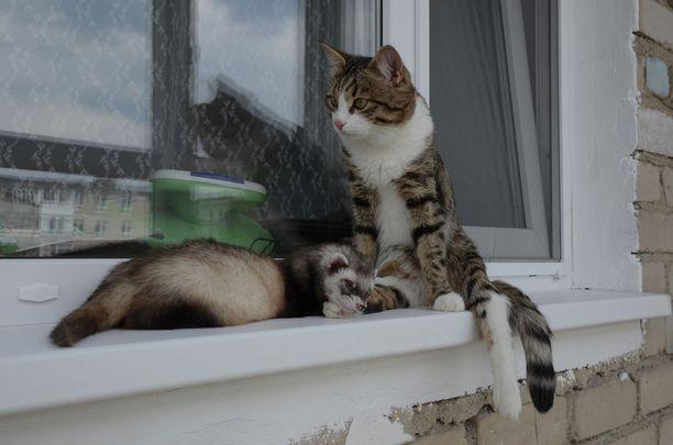 Keanu-fretti ja Rexie-kissa ovat ylimmät ystävykset.