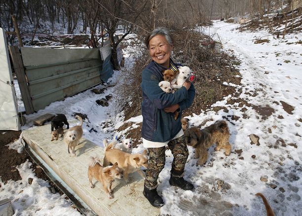 Jung Myoung Sook rakastaa koiriaan.