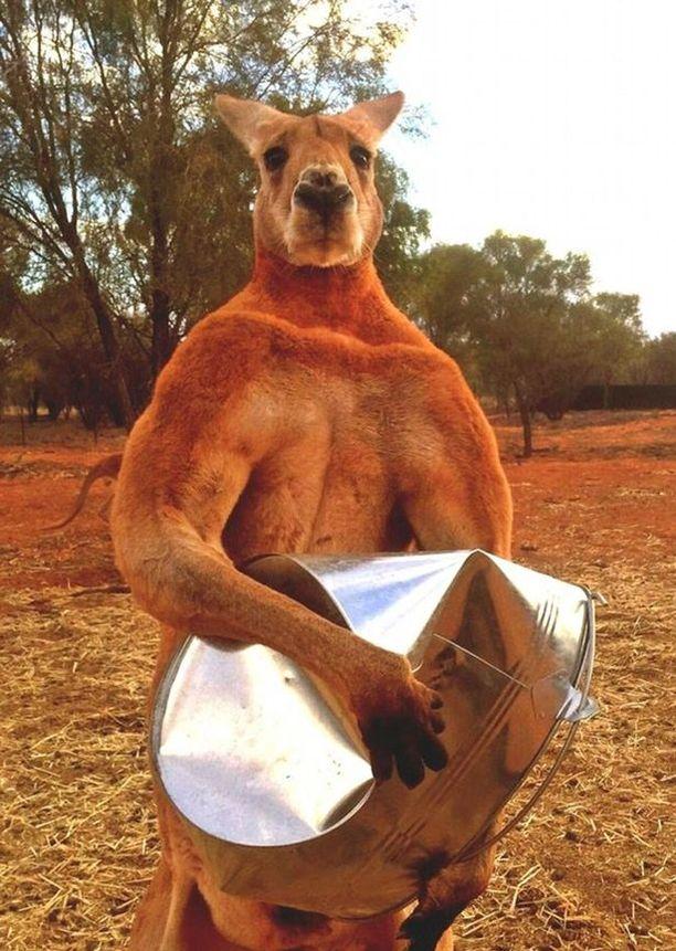 Roger pystyi murskaamaan metalliämpäreitä lihaksikkailla etutassuillaan.