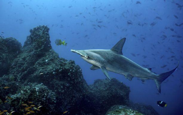 Galapagossaarilla elää lukuisia ainutlaatuisia lajeja.