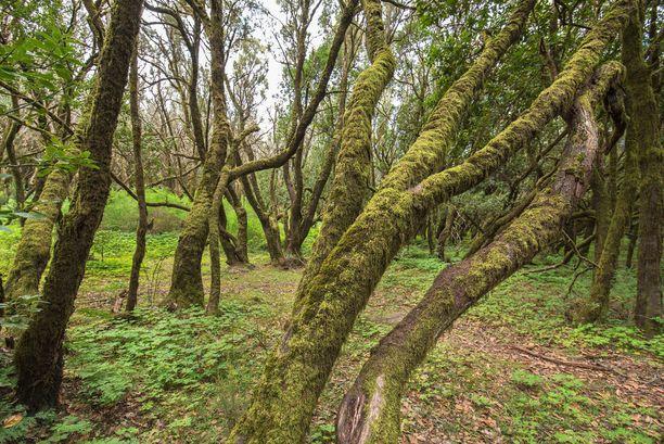 La Gomeran tunnetuin nähtävyys on Garajonayn kansallispuisto.