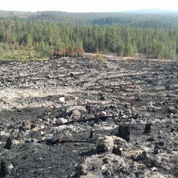 Paloalueella on tietysti valtava määrä puuta nurin siltä osin, kun ne eivät ole palaneet.