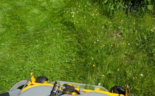 Kuinka pitkälle syksyyn nurmikko pitää leikata? Älä unohda vitosen sääntöä