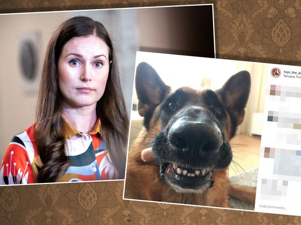Pääministeri Sanna Marin jäi Vuoden tamperelainen -äänestyksessä toiselle sijalle. Some-koira Topi the Dog vei voiton.