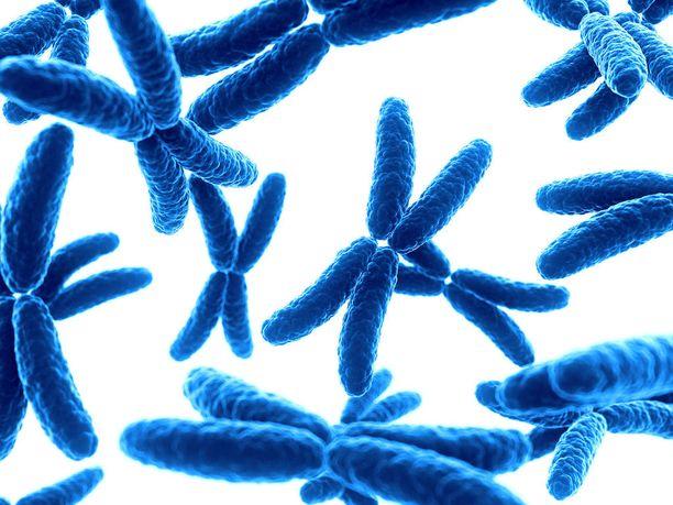 Raiskauksesta epäillyn savolaismiehen X-kromosomi esiintyy alle prosentilla Suomen miehistä. Kuvassa on kolmiulotteiseksi käsiteltyjä X-kromosomeja.