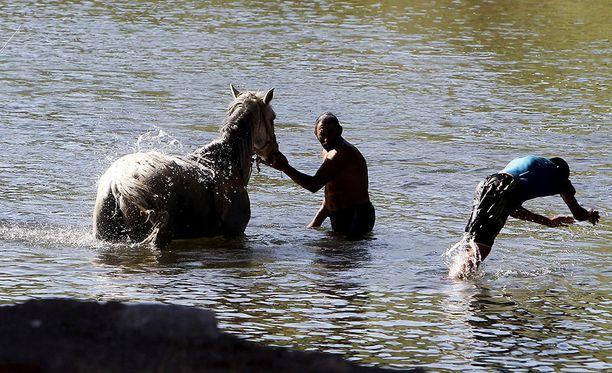 Mies vei hevosen viilentymään jokeen Etelä-Serbiassa.