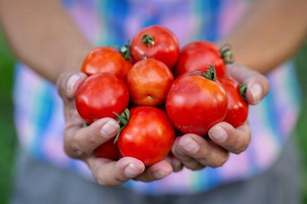 Kasviksissa on missä valita: tomaatti on yksi parhaista ja monipuolisimmista luonnon antimista.