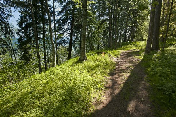 Suuri osa puistosta on luonnontilassa. Sen poluilla on hauska vaeltaa.