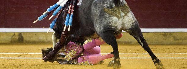Juan Jose Padilla joutui karmeaan härkätaisteluonnettomuuteen.