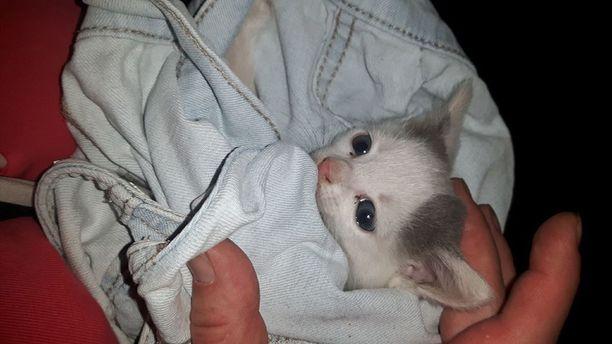 Kotkalaiset järkyttyivät tienposkeen hylättyjen kissanpentujen kohtalosta.