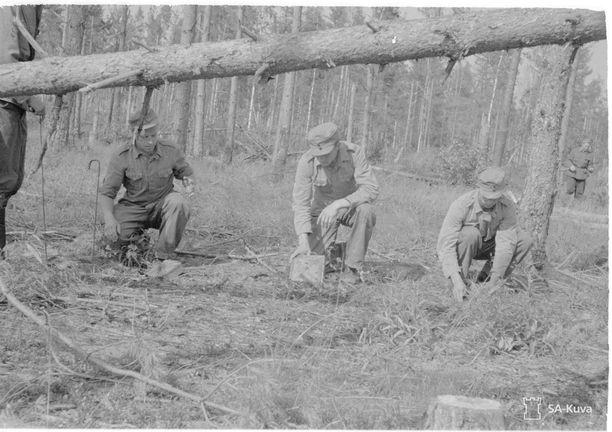 Rintamalisää saavat myös vuosina 1945-1952 miinanraivaustöihin osallistuneet henkilöt.