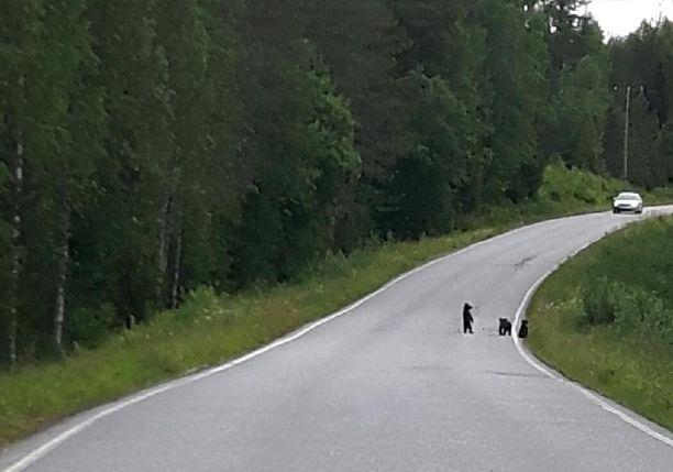 Kolme karhunpentua havaittiin maantiellä Joensuun seudulla.