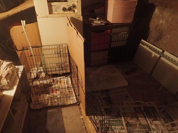 Poliisi ja valvontaeläinlääkäri löysivät pennut omakotitalon kellarista.